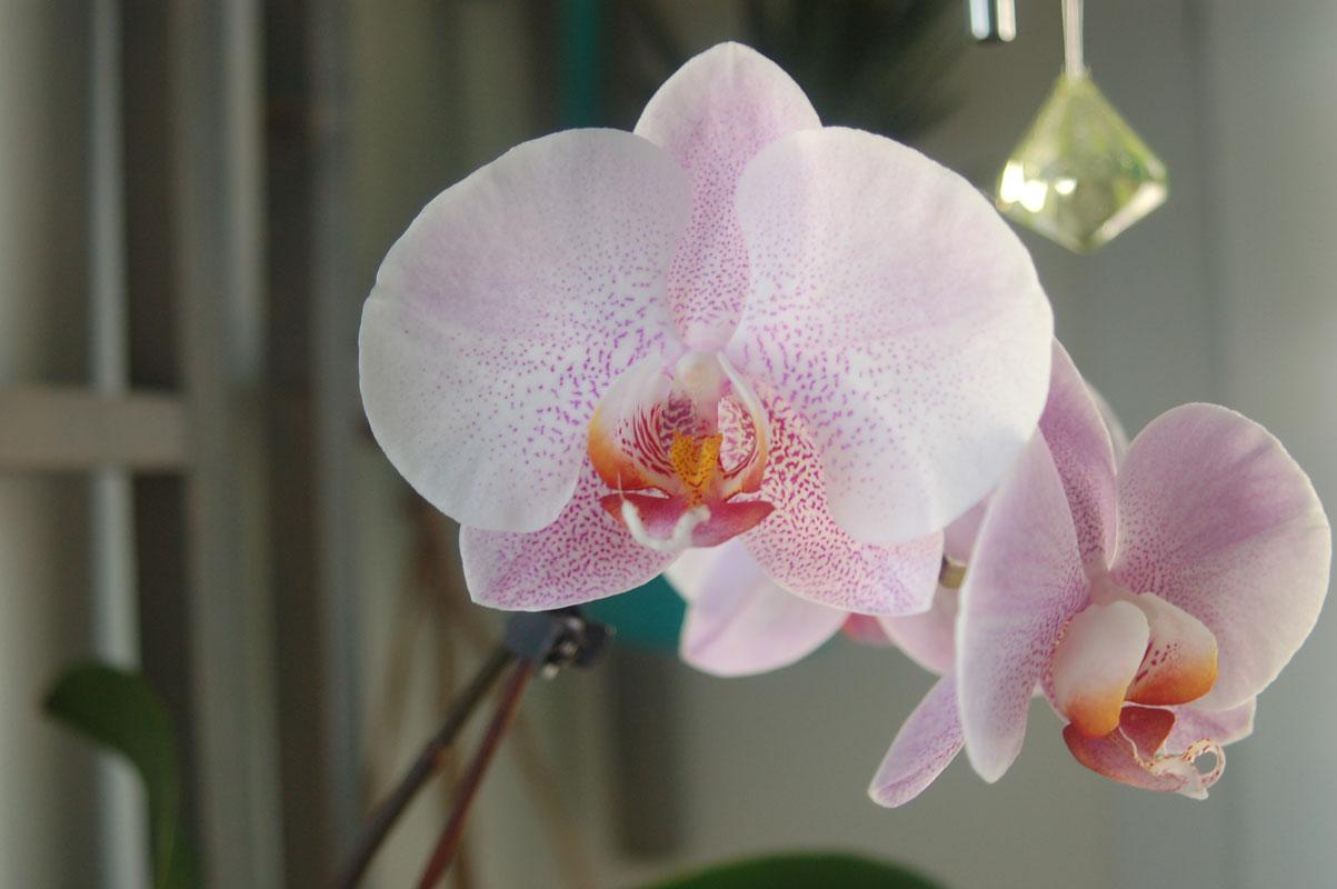 Photo Orchidée