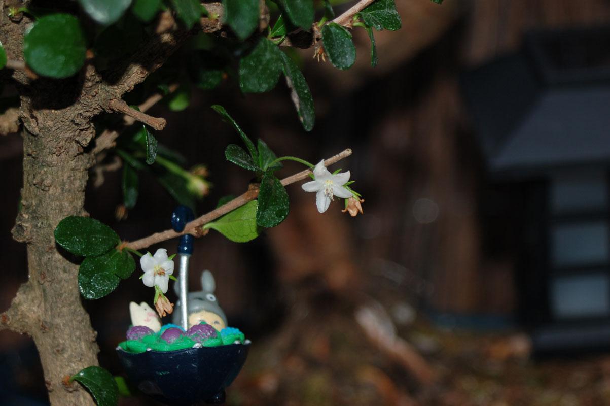 Photo Bonsai en fleur
